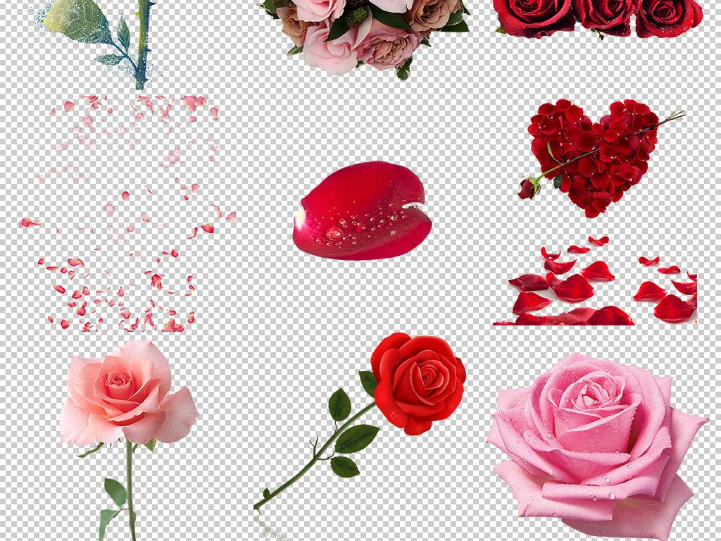 花瓣图片玫瑰花元素心形
