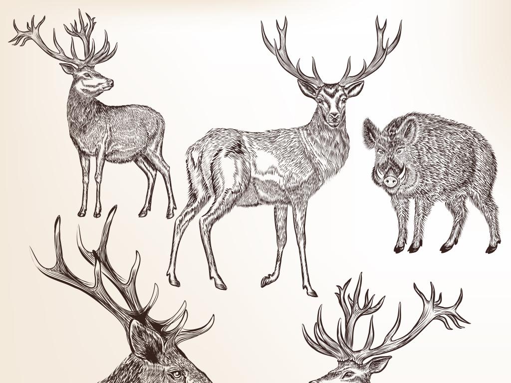 3d手绘怀旧鹿