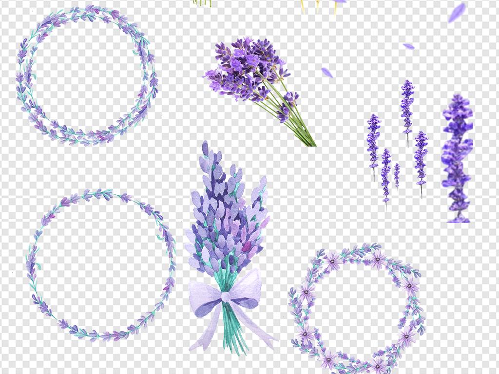 手绘薰衣草薰衣草边框浪漫花环清新花卉花朵装饰薰衣草紫色花背景紫色