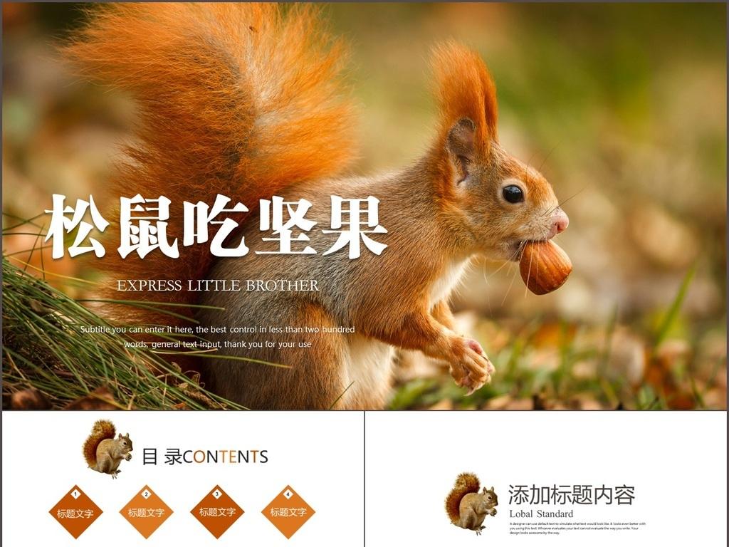 动物松鼠吃松果保护动物动态ppt模板