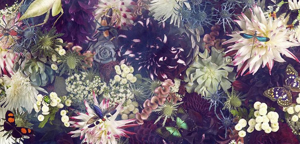 创意唯美植物花朵蝴蝶绘画装饰画