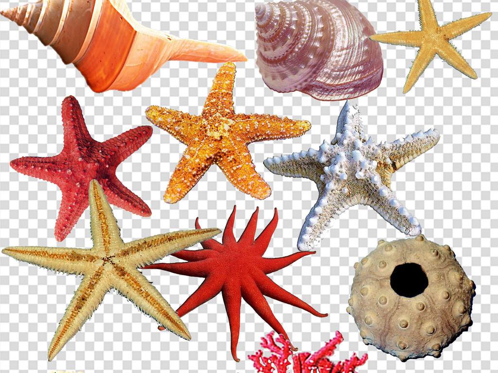 海洋小动物png素材