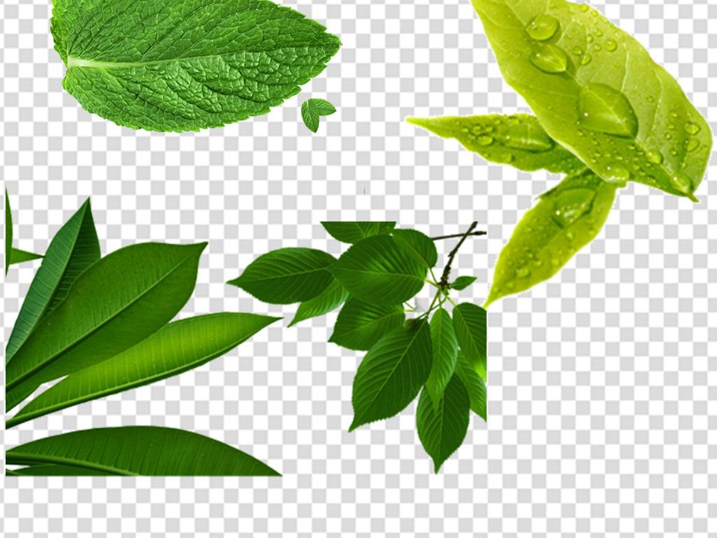 免扣设计素材手绘树叶叶子手抄报元素