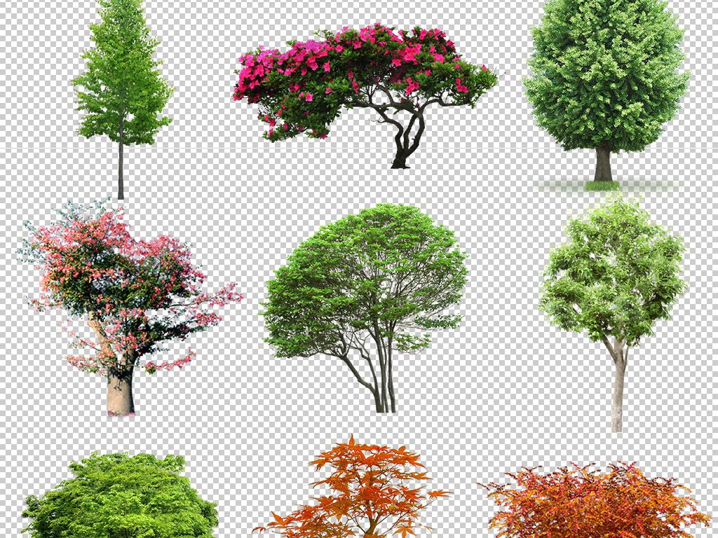 柏树枫树花卉植物山林卡通手绘春天树森林树木