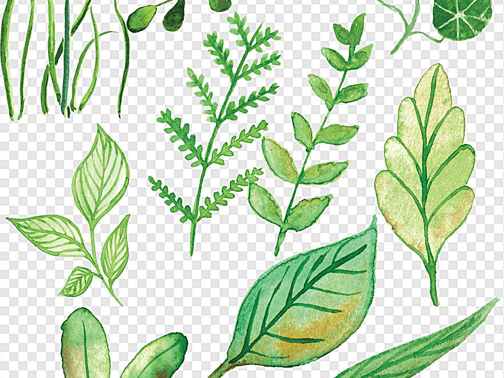 绿色叶子水彩叶子各种叶片春天叶子图片