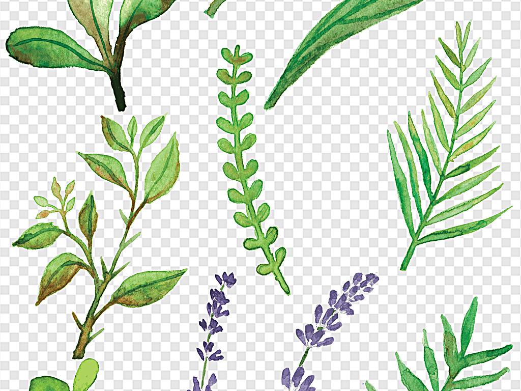 绿色叶子水彩叶子各种叶片春天叶子(图片编号:)_树叶