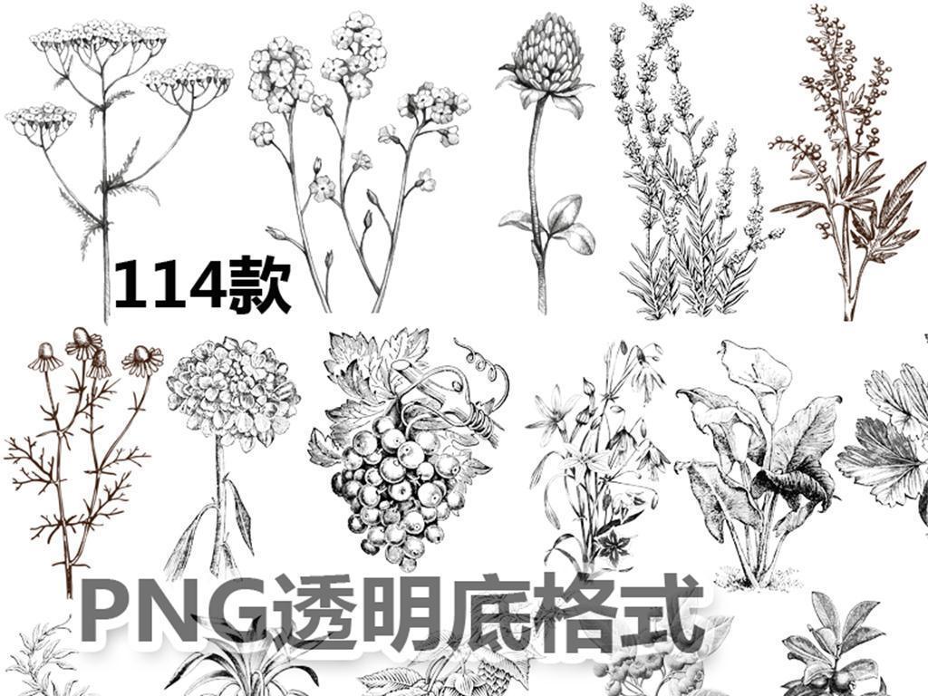 植物蔬菜水果花朵手绘线稿化妆品包装设计素材png透明
