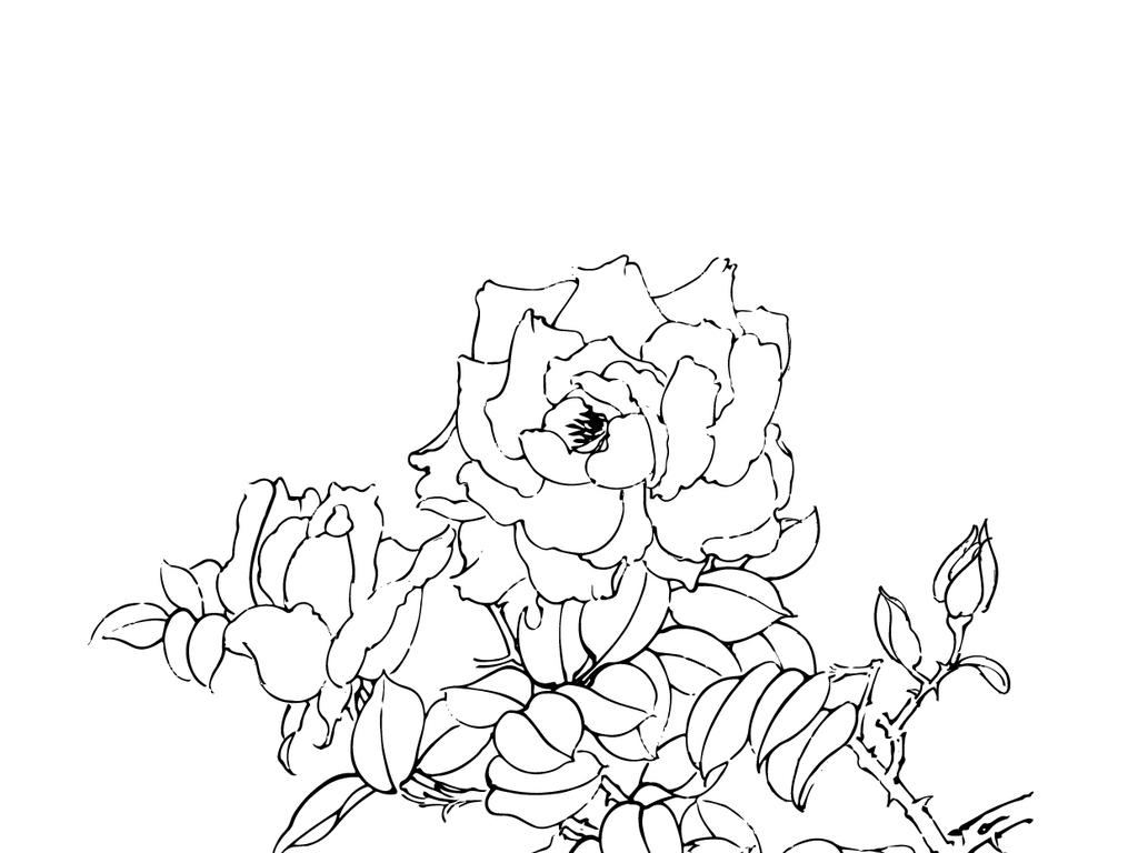 月季花黑白画                                  花卉线描花卉线稿