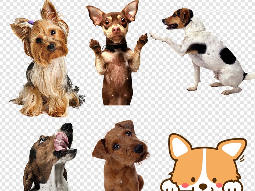 手绘小狗小狗狗单身狗表情单身汪汪星人宠物狗小狗元素卡通动物素材