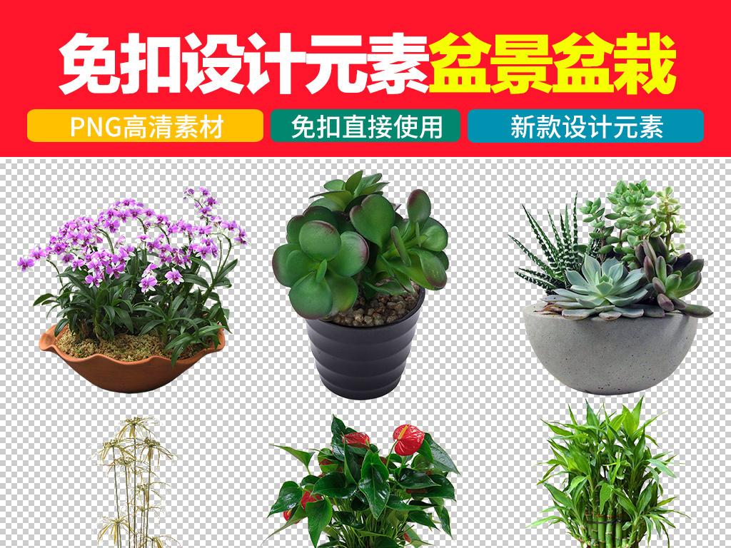 植物花卉盆景盆栽免扣png图片