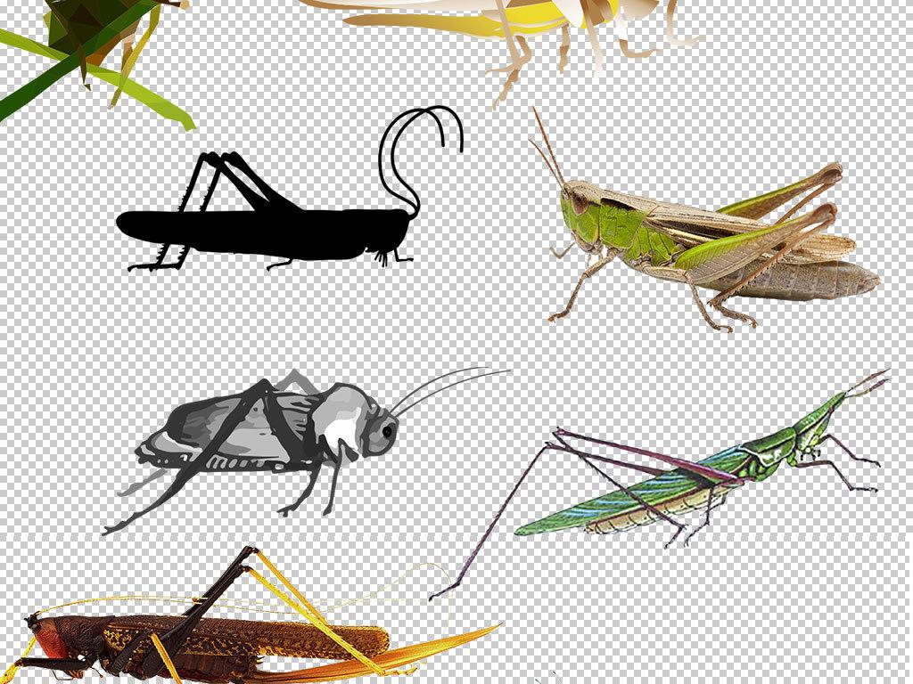 卡通手绘蚂蚱动物图片png素材