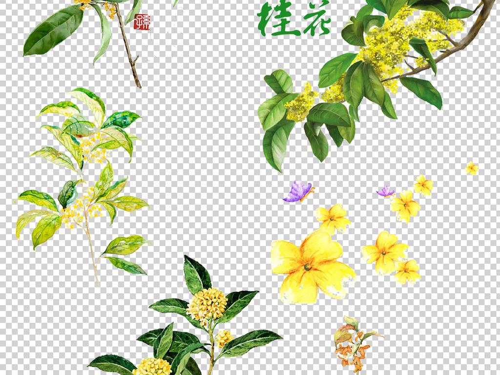 中国古风手绘桂花png透明背景免扣素材