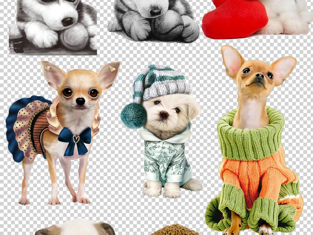 设计元素 自然素材 动物 > 可爱小狗png透明背景免扣素材  版权图片
