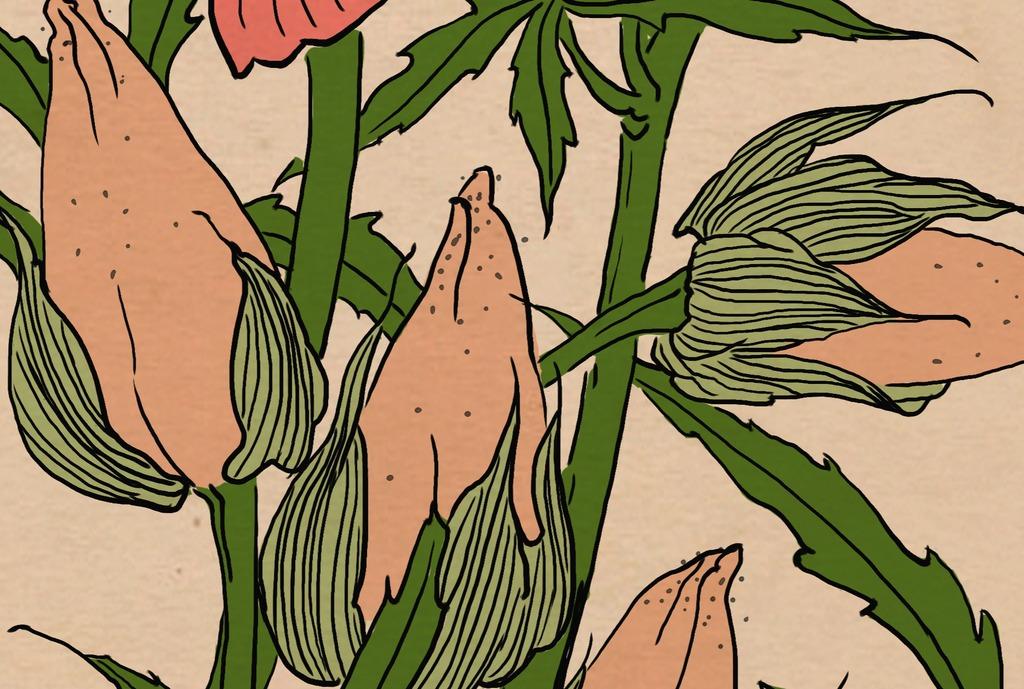 高清木槿花白描上色中国风装饰画无框画