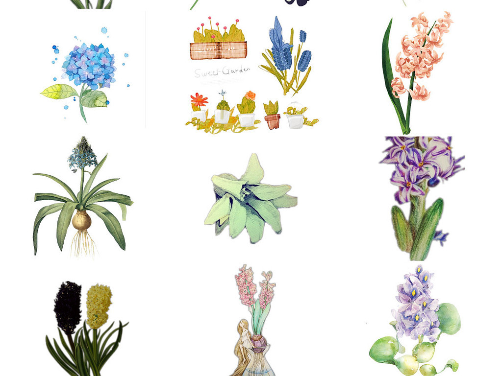 观花植物手绘风信子ps设计装饰元素