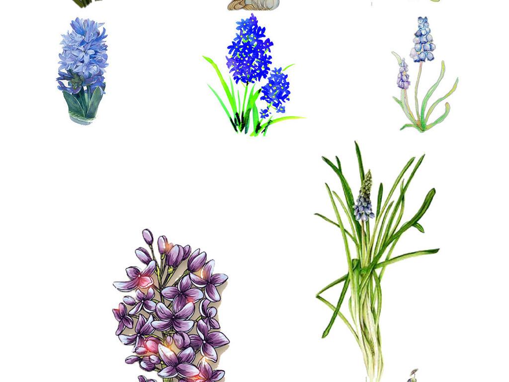 设计元素 其他 效果素材 > 观花植物手绘风信子ps设计装饰元素