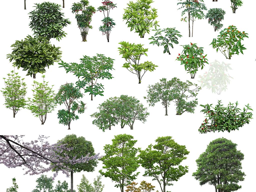 园林景观植物树木psd分层素材