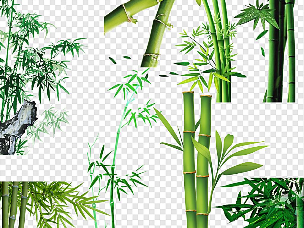 卡通竹子竹子熊猫绿色竹子中国风水墨竹子