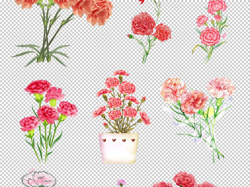 手绘花母亲节水彩花朵花开富贵花卉植物康乃馨植物