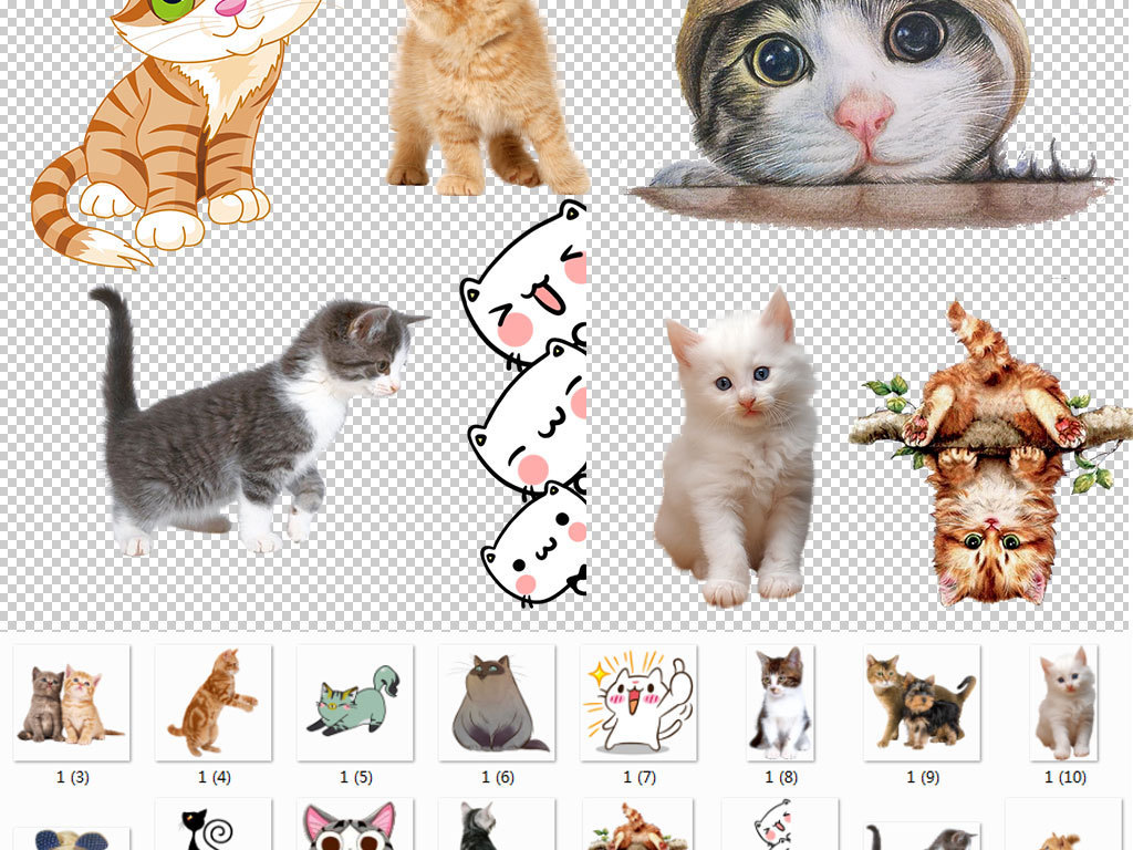 小猫咪白色小猫咪小猫咪图片小猫咪卡通卡通可爱小猫咪可爱小猫咪图片