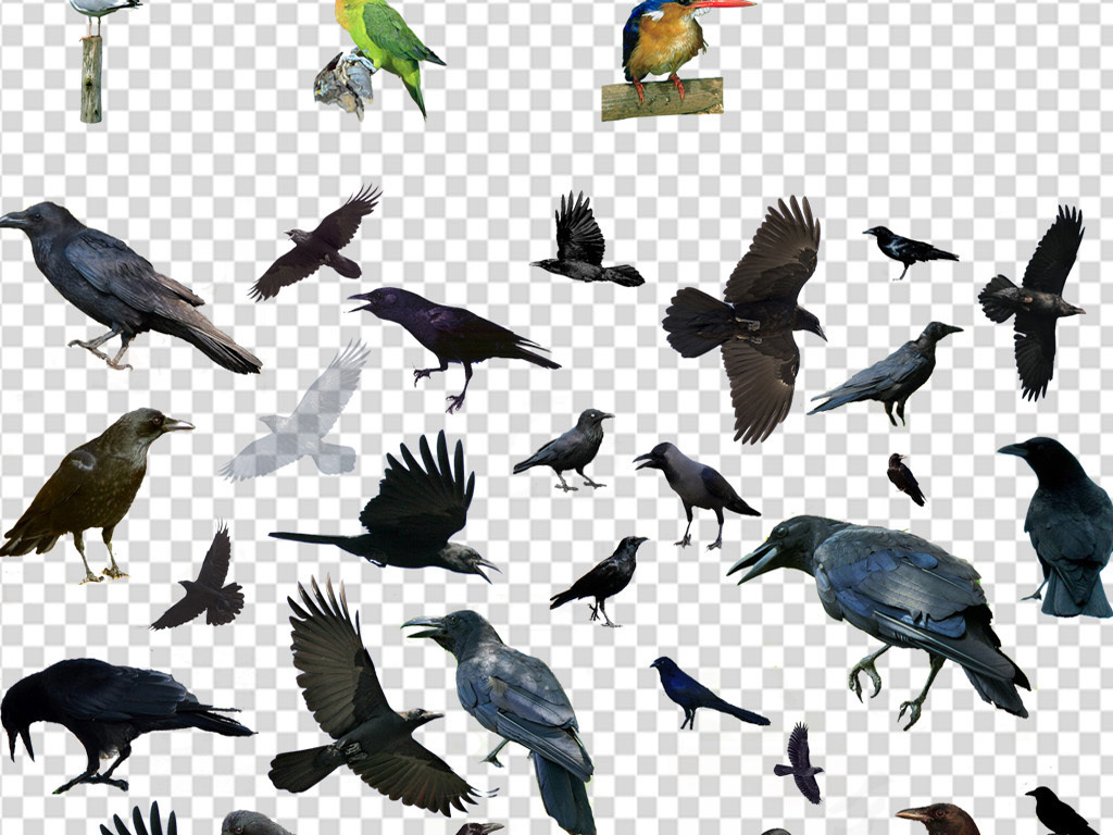 花鸟鸟类花鸟png装饰画素材水彩花鸟花鸟手绘水彩手绘手绘鸟类飞鸟