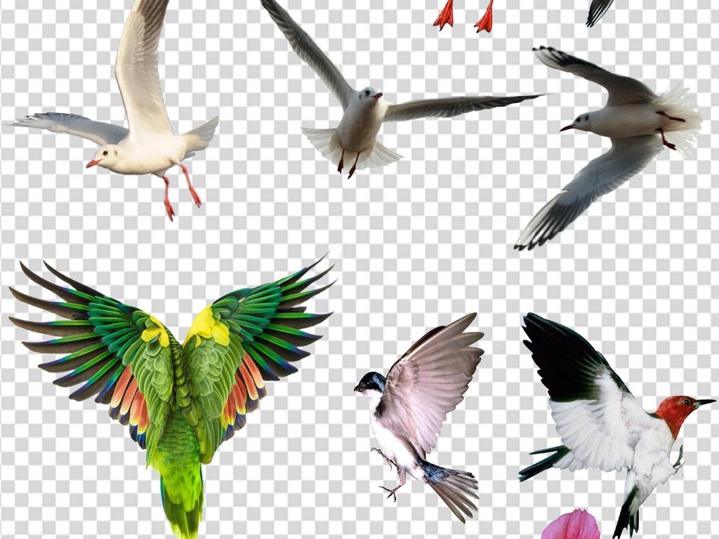鸟手绘水彩手绘手绘鸟类飞鸟元素百鸟老鹰鹦鹉图片海鸥飞翔天上飞鸟