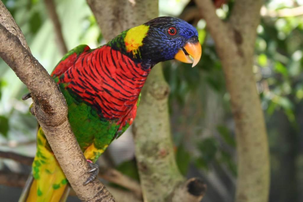 鸟野生动物鸟群珍稀动物动物世界鸟类图片飞鸟