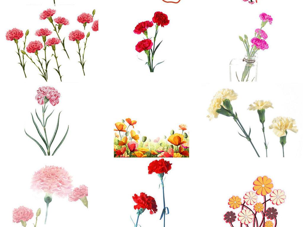 鲜艳鲜花康乃馨海报设计素材系列3