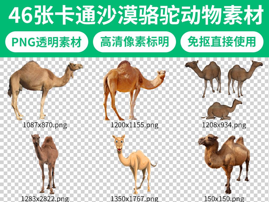 丝绸之路沙漠骆驼卡通动物素材