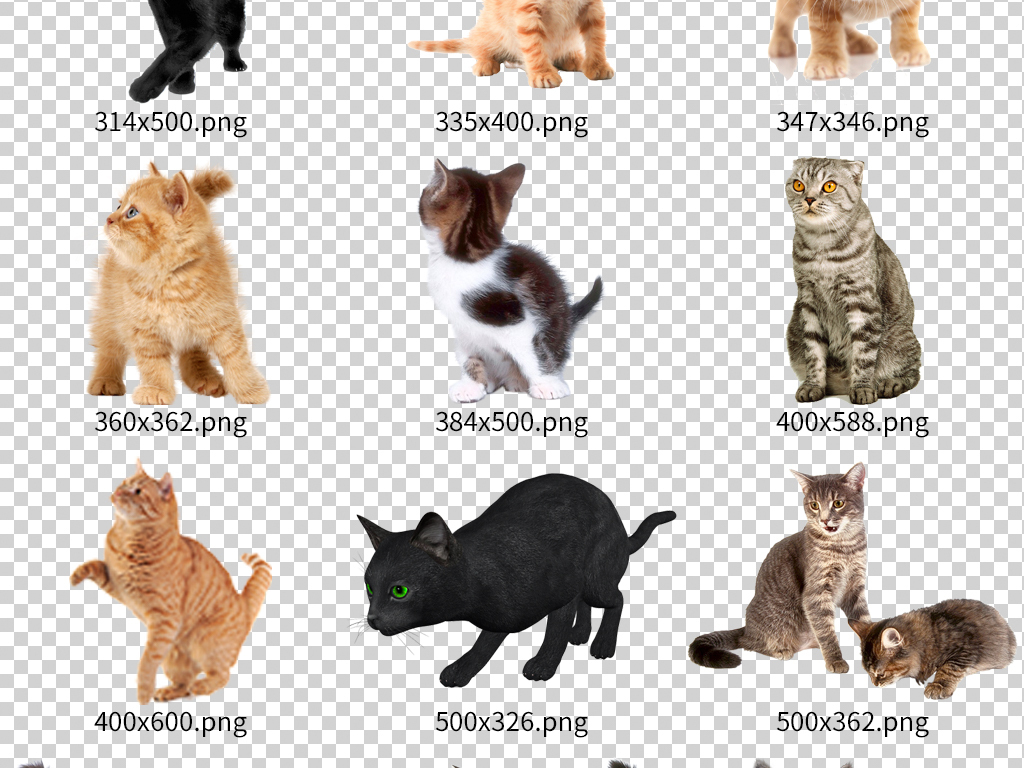 手绘小猫                                  手绘动物