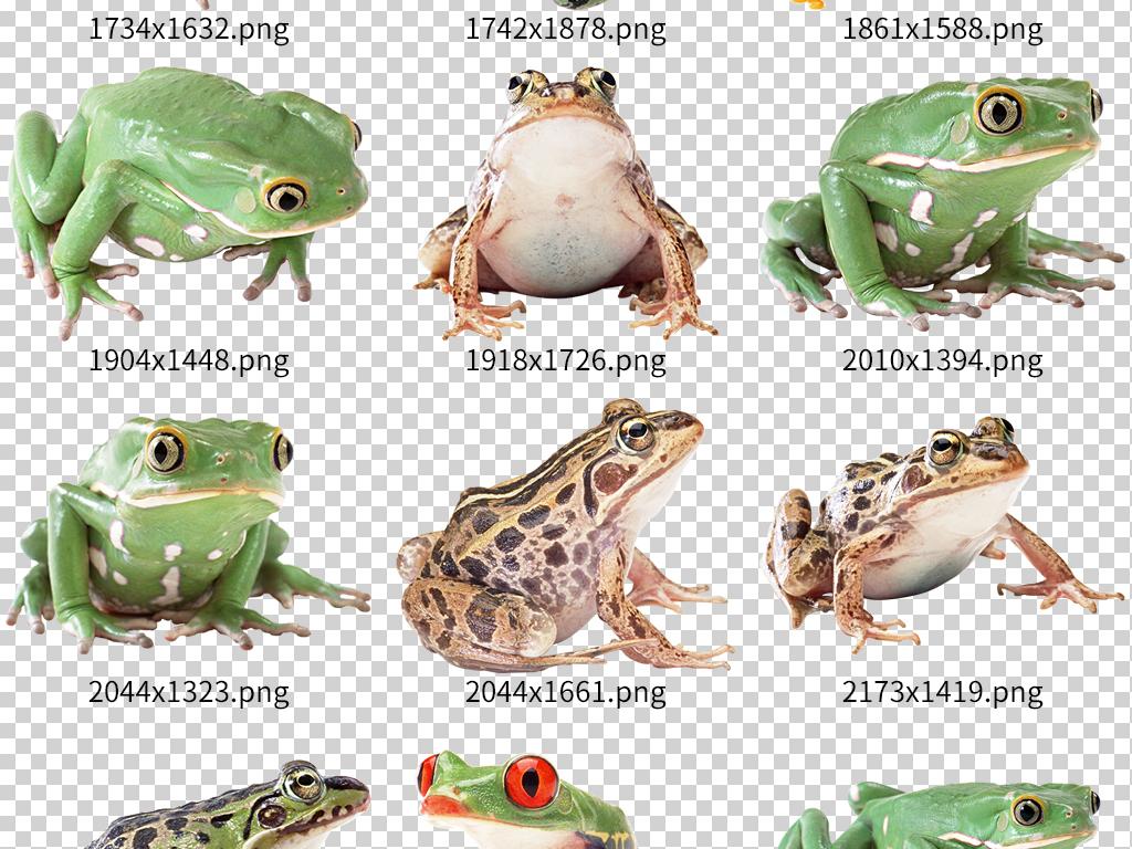 卡通绿色青蛙动物世界高清素材