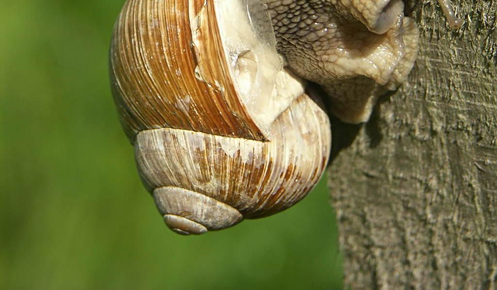 攀爬外壳蜗牛图片超可爱动物高清动物