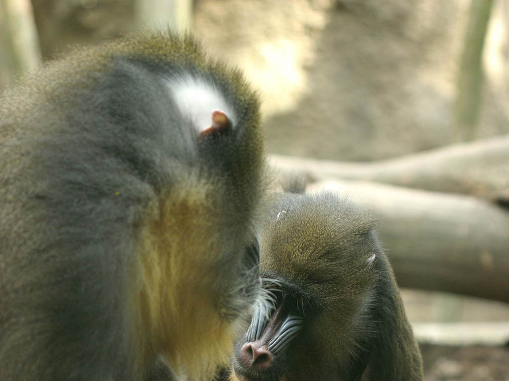 猴动物照片大全