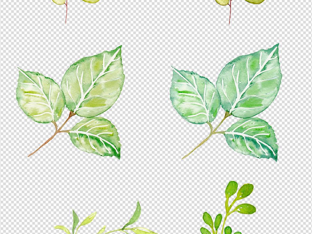 设计元素 自然素材 树叶 > 手绘树叶png素材  手绘树叶png素材图片