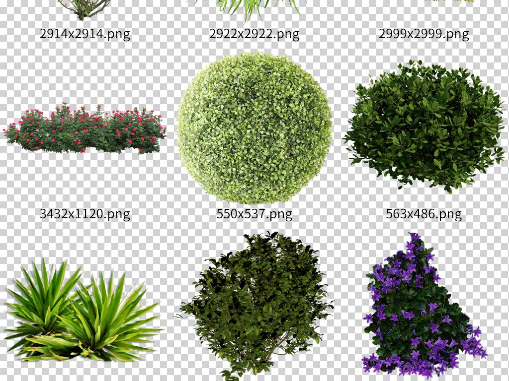 绿化灌木园林景观植物树木素材