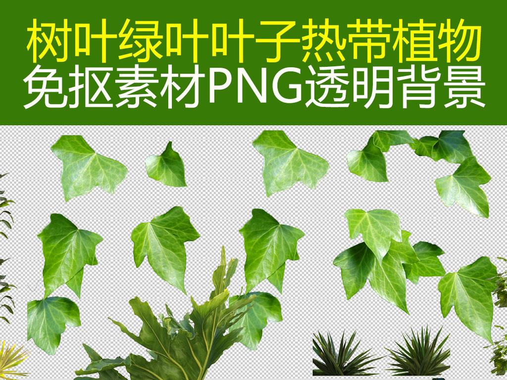 绿叶叶子棕榈叶树叶免抠素材png