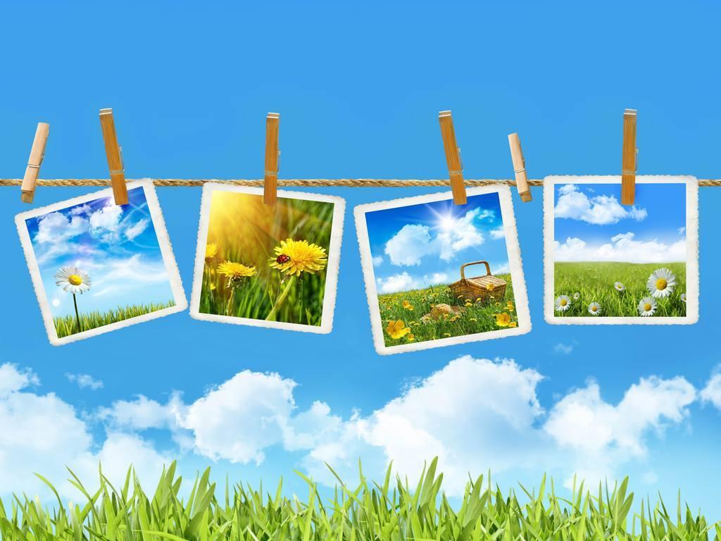 绿叶相框花框树叶植物画框节日装饰相框树叶边框装饰背景