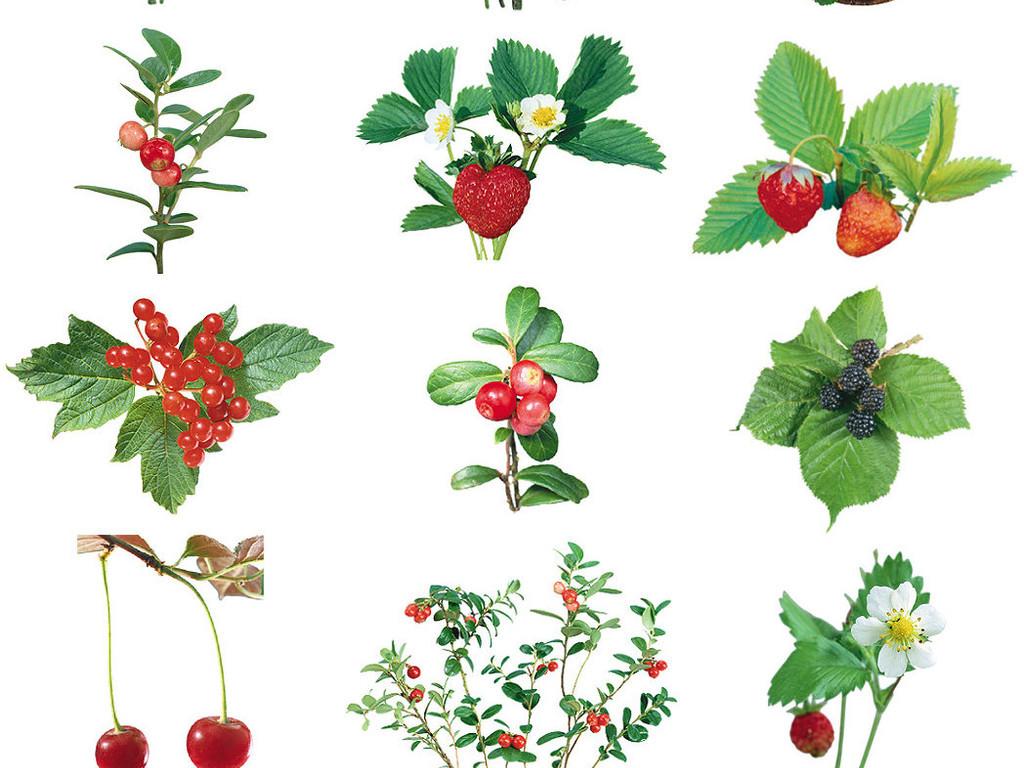 多种精美手绘水彩花朵免抠素材系列3
