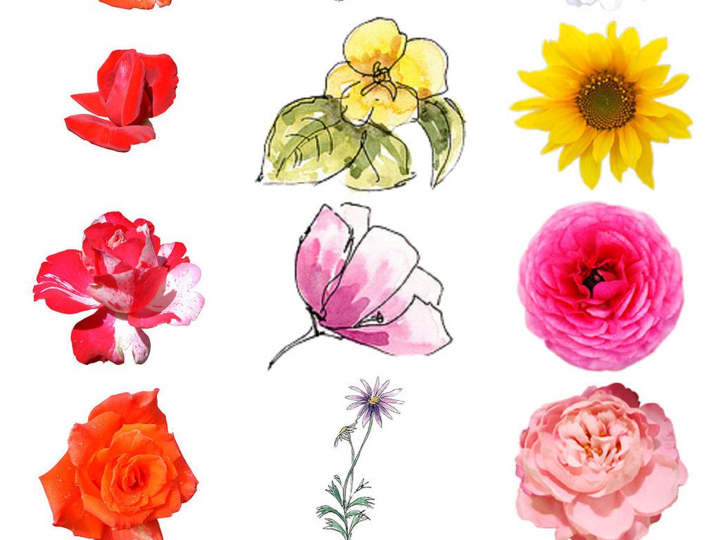 多种精美手绘水彩花朵免抠素材系列1