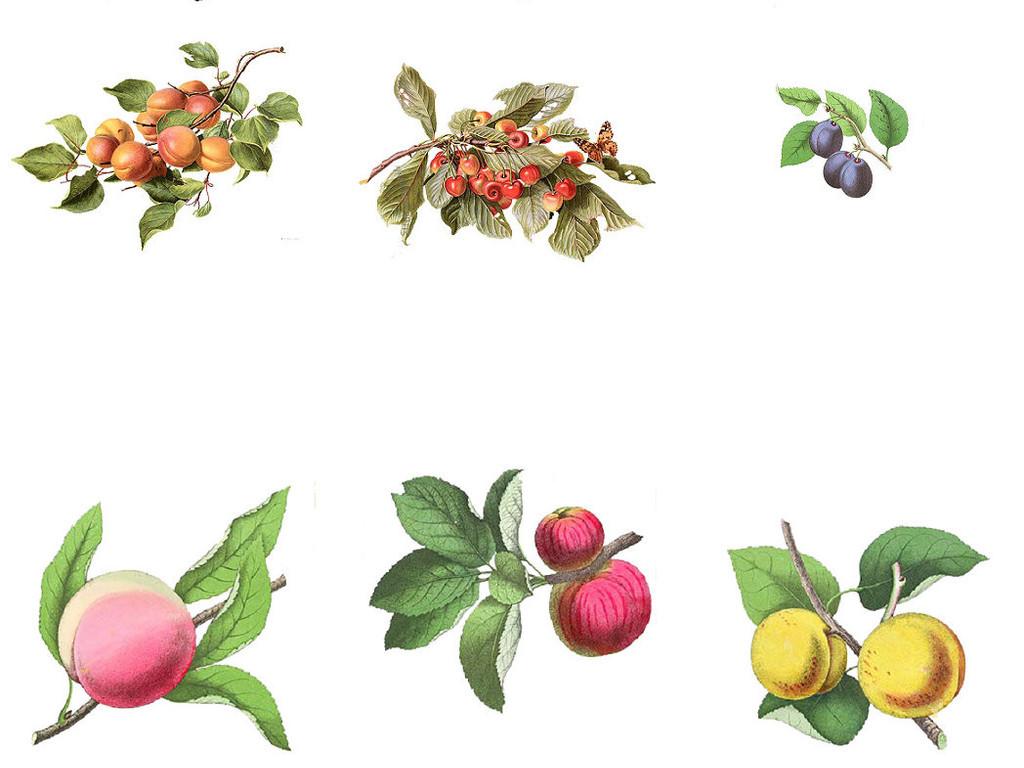 多种精美手绘水彩花朵免抠素材系列5