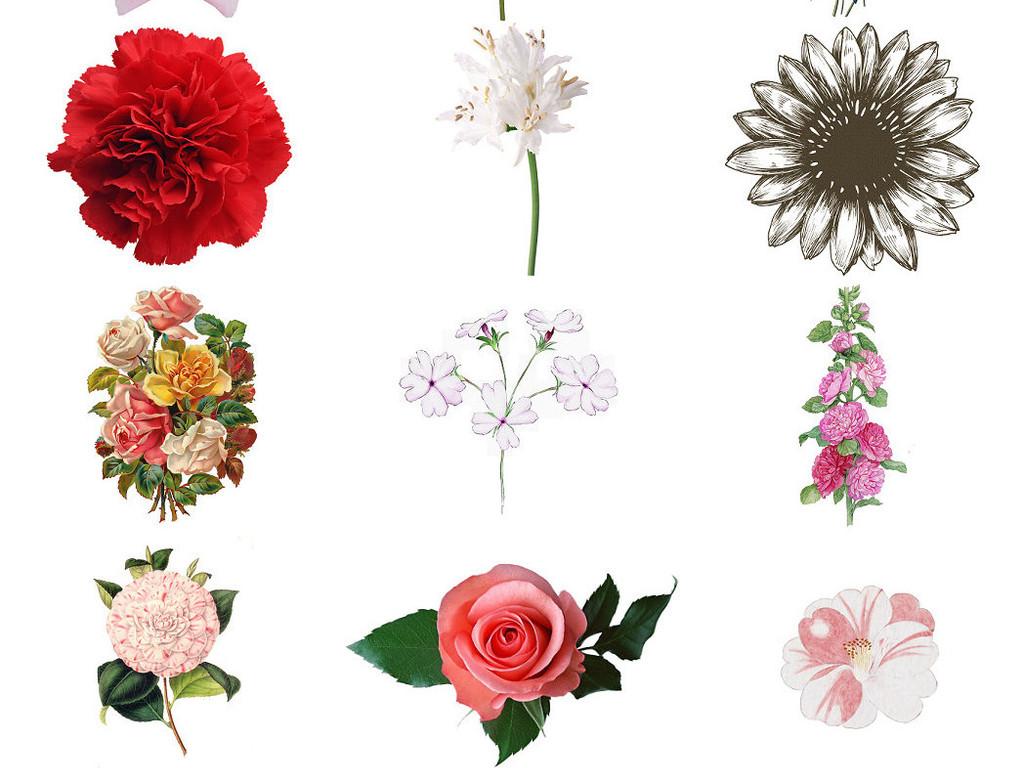 手绘花朵免抠剪贴设计素材1