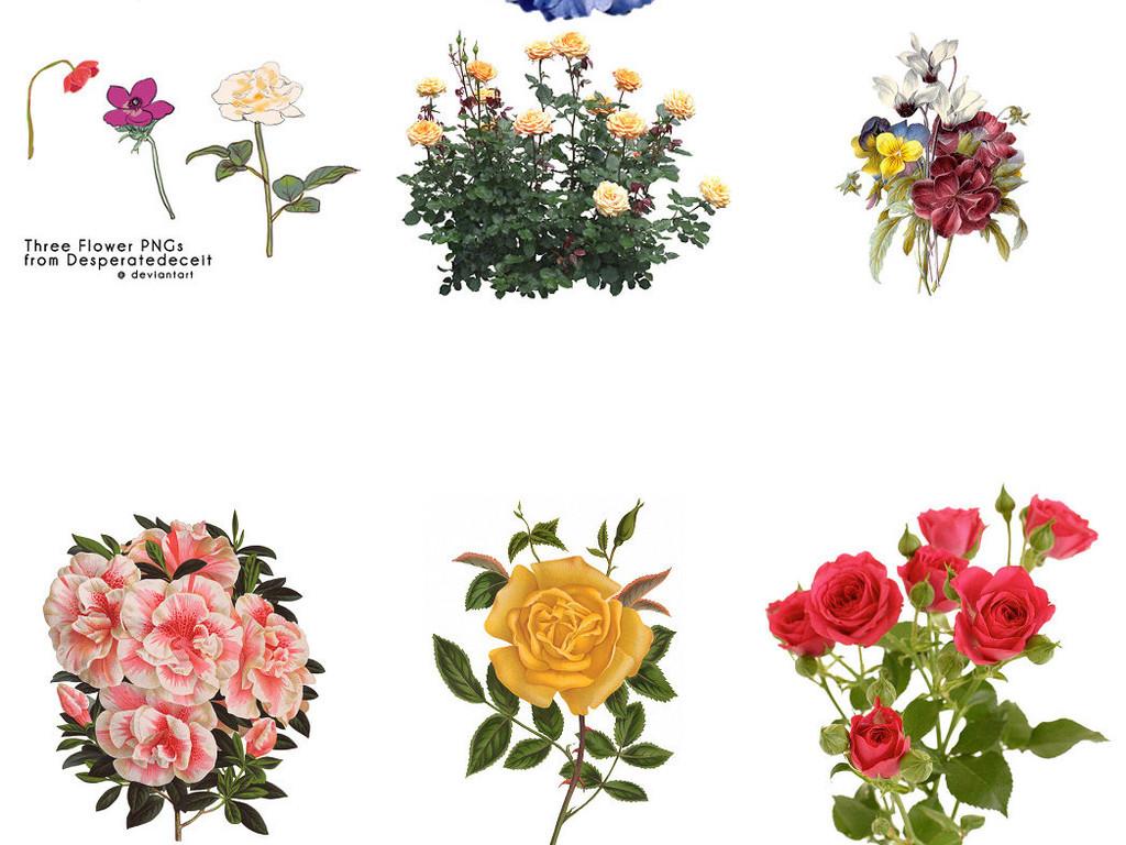 手绘花朵免抠剪贴设计素材3
