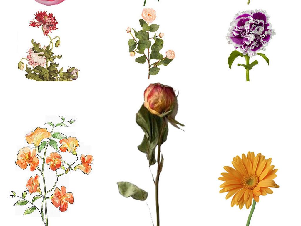 手绘花朵唯美花朵唯美花卉唯美唯美背景唯美花纹唯美婚纱卡通系列唯美