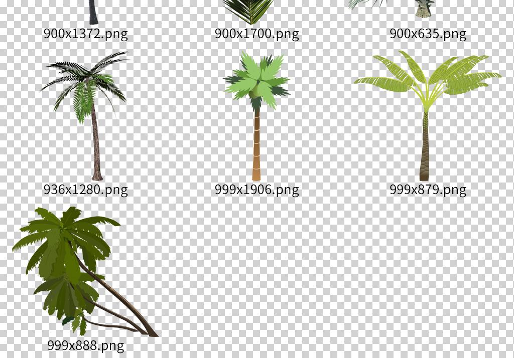 海边椰子树绿色植物ps椰子树素材手绘椰子树叶子沙滩椰子树风景海岛