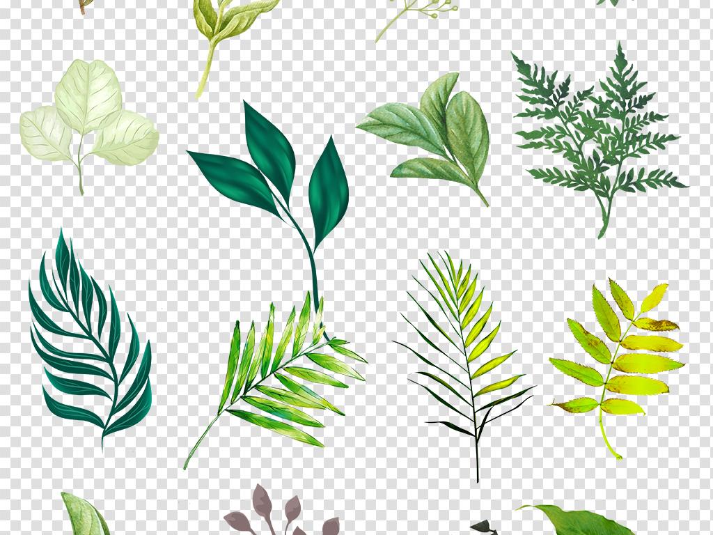 树叶素材叶片素材清新绿色png免扣素材