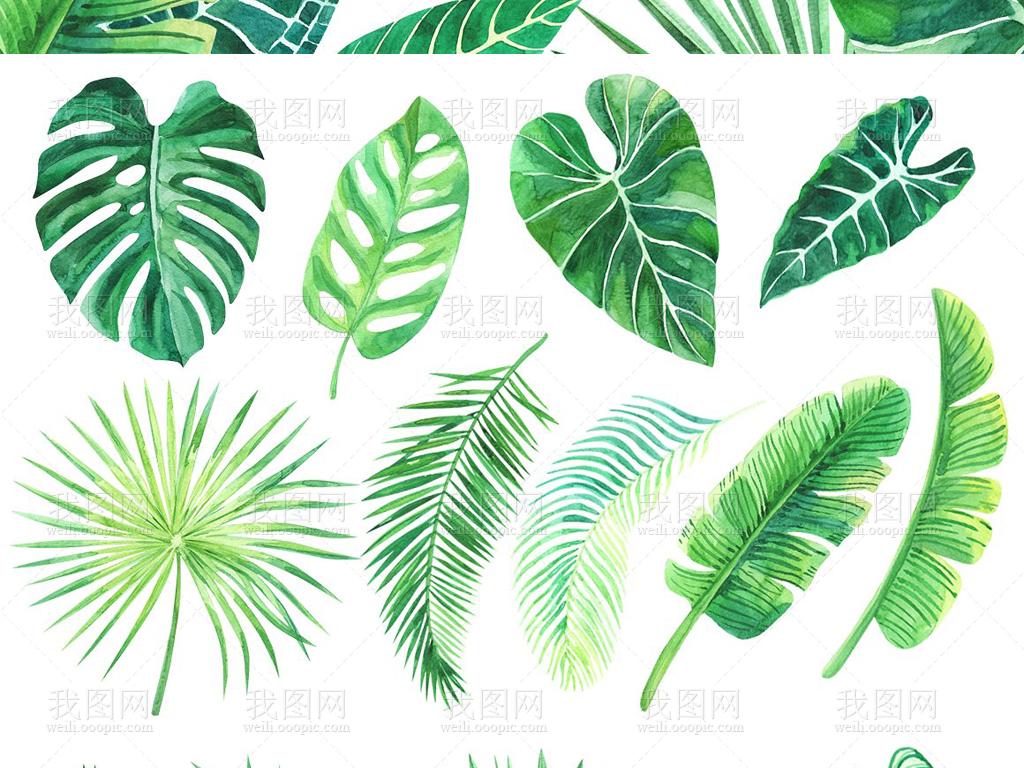 水彩画绿叶叶子png免抠素材