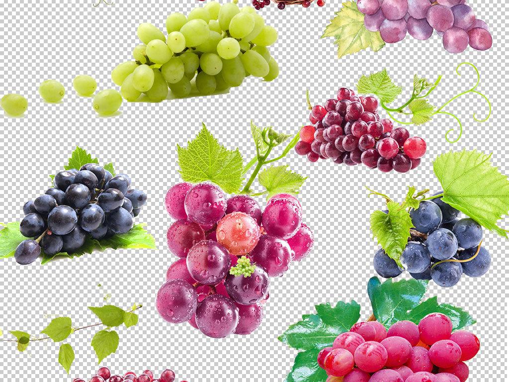 png)                                  紫葡萄