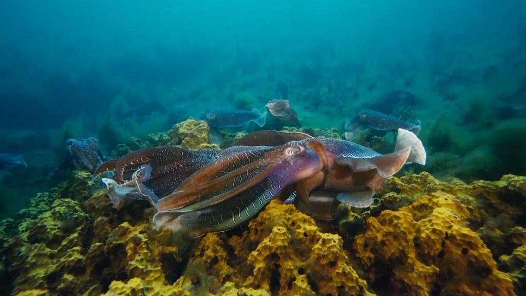 环保手工制作海底动物