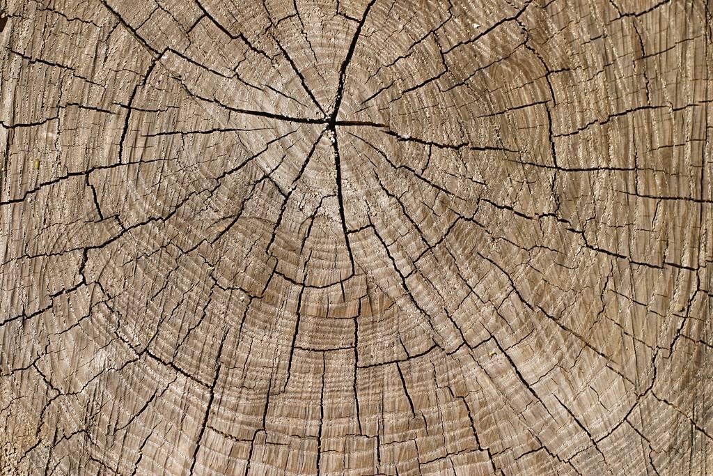 树木年轮枯木木头裂缝老树墩爆裂裂纹材质松树堆栈砍树木铃木木边木指