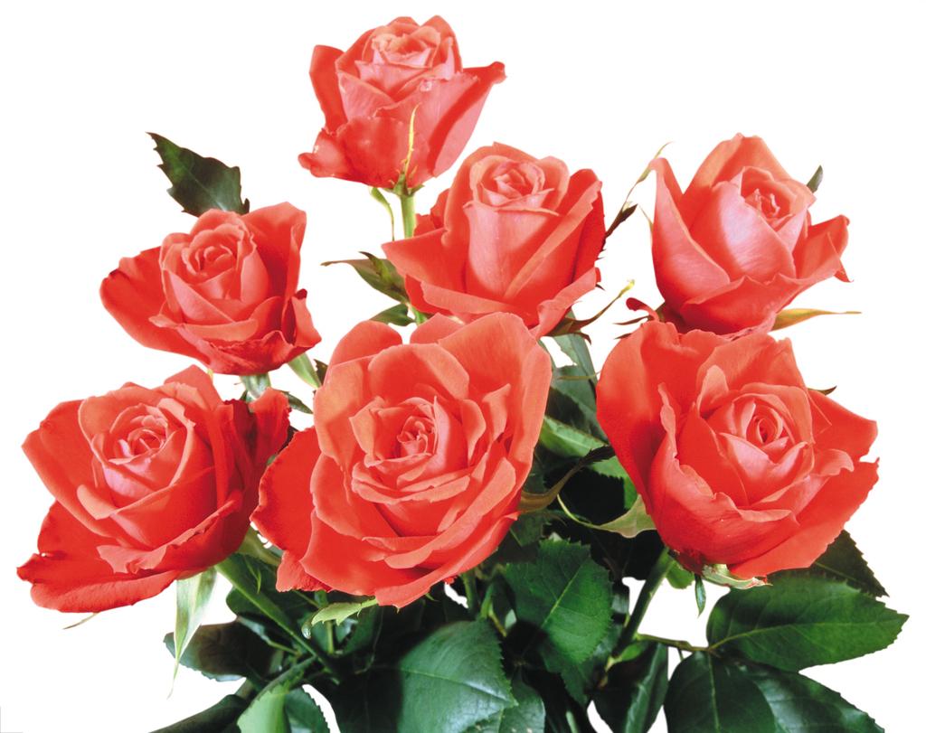 玫瑰花束0075